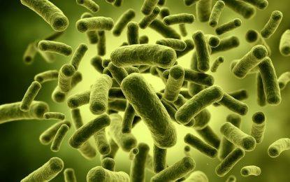 Пробиотиците – защо са толкова полезни?
